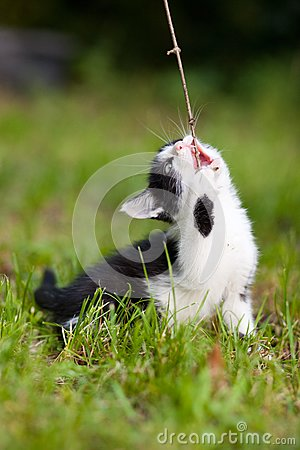 A cat with a stick