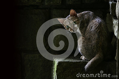 Cat on stone step