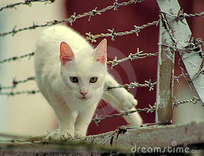 Cat Stuck in Barbed Wire