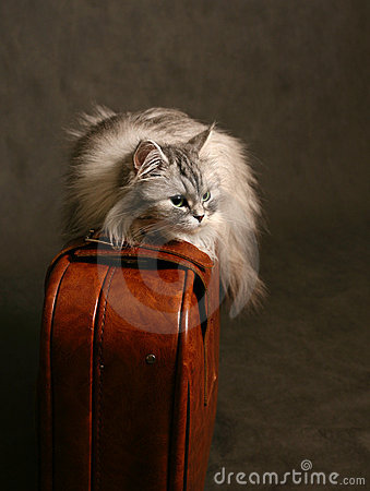 CAT ON A SUITCASE The image the cat