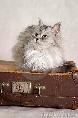 White cat · Cat on a suitcase