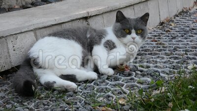 The cat in the sun. The pretty lazy cat basks in the hot May sun stock video footage