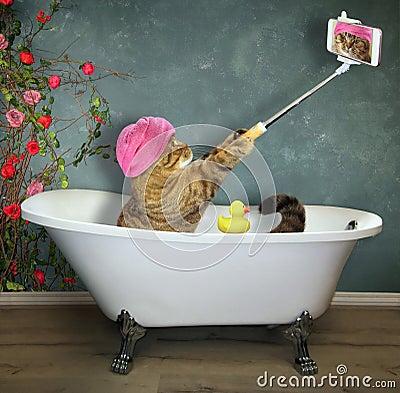 Free Cat Takes A Bath Stock Photos - 120650643