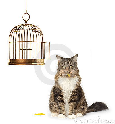 Free Cat That Ate The Canary Stock Photography - 5123352