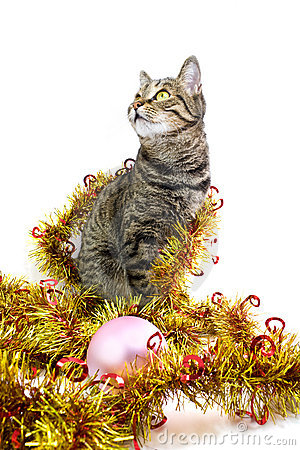 The cat in a tinsel look left