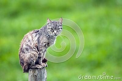 Cat in the top