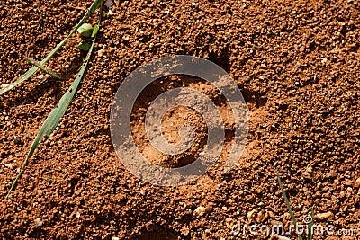 Cat Track in Wet Mud