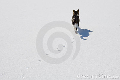 Cat tracks in snow.