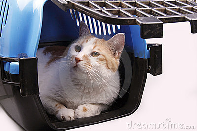 Cat in transport box Stock Photo