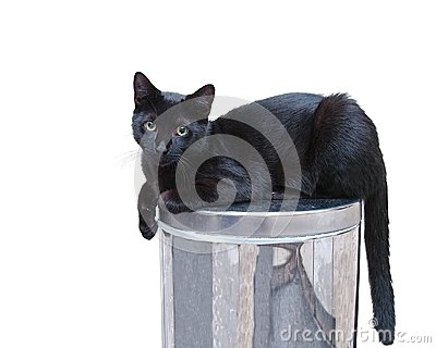 Cat on trash can