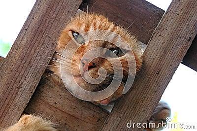 Cat on a Trellis