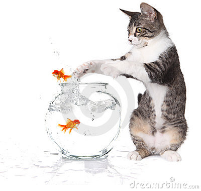 Free Cat Trying To Catch Jumping Goldfish Stock Image - 11002511