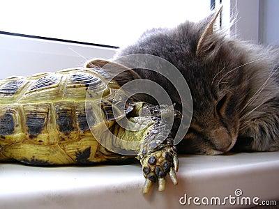 Cat&turtle