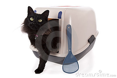 Cat using a closed litter box
