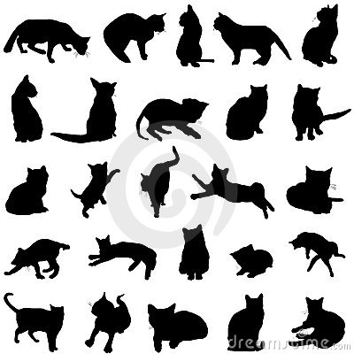 Free Cat Vector Stock Photography - 4800352