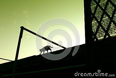 Cat walking on roof