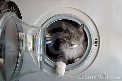 Cat in the washing machine