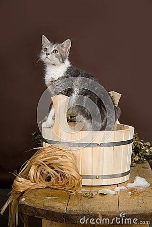 Cat In The Washtube