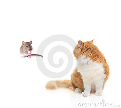 Free Cat Watching A Mouse Royalty Free Stock Images - 6647449