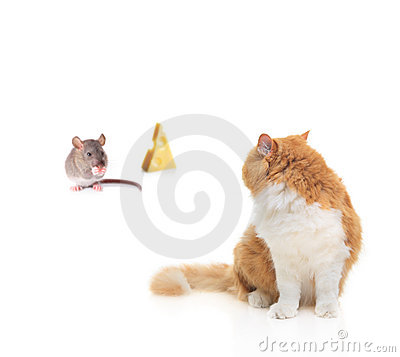 Free Cat Watching A Mouse Nibbling Some Cheese Stock Image - 6647471
