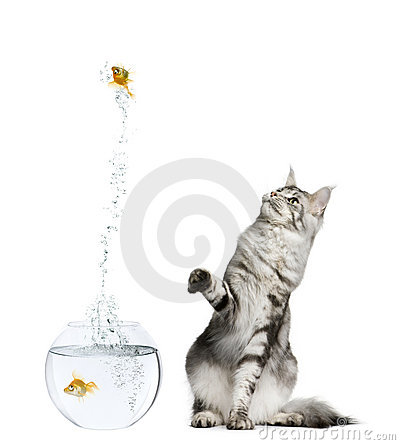 Cat watching goldfish leaping out of goldfish bowl