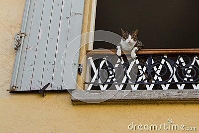 Cat watching you!