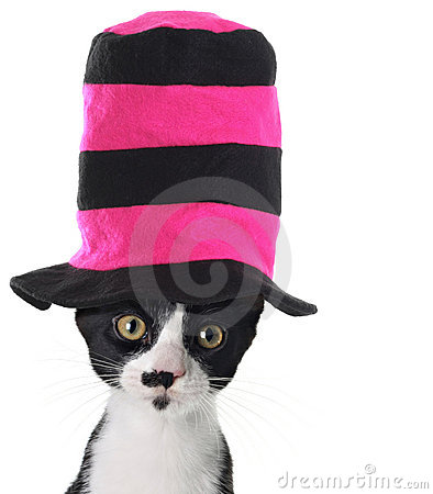 Free Cat Wearing A Hat Stock Image - 12408151