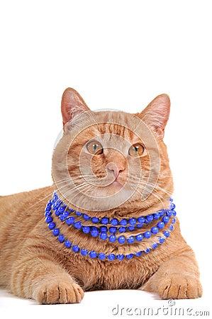 Cat wearing Beads