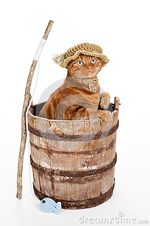 Cat wearing fisherman hat