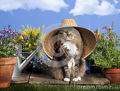 Cat Wearing Gardening Hat Stock Photo