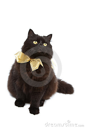 Cat wearing golden bow isolated