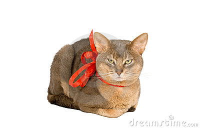 Cat wearing red bow
