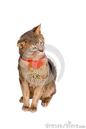 Cat wearing red heart