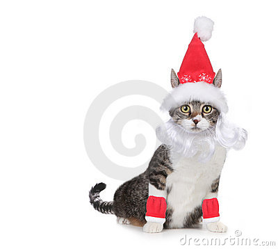 Cat Wearing a Santa Claus Hat and Beard on White