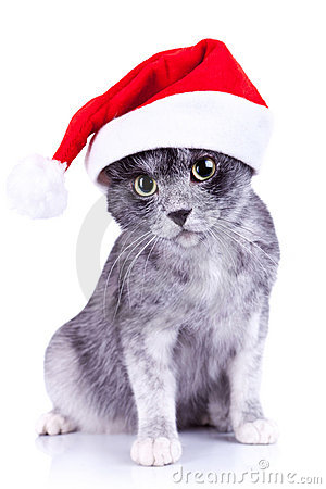 Cat wearing a santa hat looking to the camera