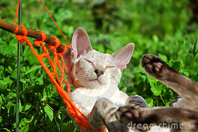 Cat on weekend