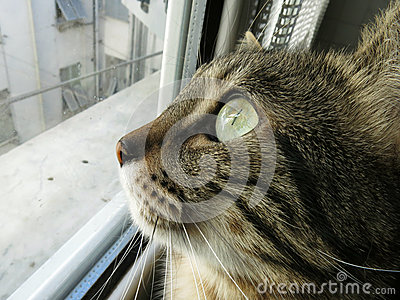 Cat At The Window Royalty Free Stock Images - Image: 29068659