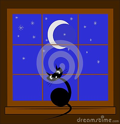 Cat in window at night
