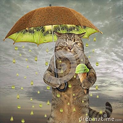Free Cat With A Kiwi Umbrella Stock Image - 122223661