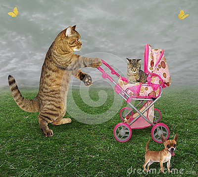 Free Cat With A Pram And A Dog Stock Image - 122443471