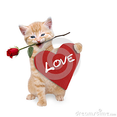 Free Cat With A Red Rose And Red Heart Stock Images - 37257834