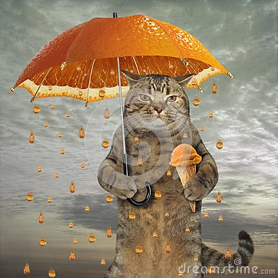 Free Cat With An Orange Umbrella Royalty Free Stock Photography - 122351067