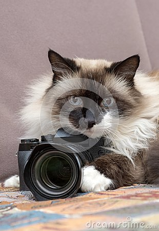 Free Cat With Camera Royalty Free Stock Photography - 119747217