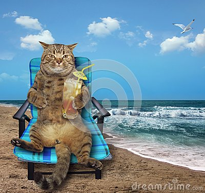 Free Cat With Cocktail On Beach Royalty Free Stock Images - 120565629