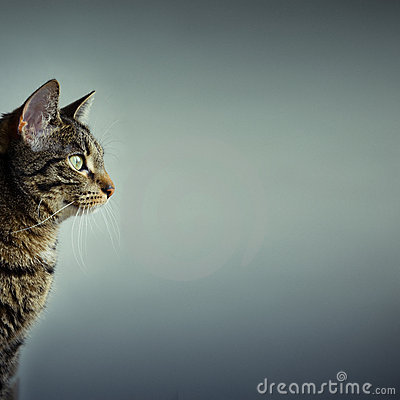 Free Cat With Copy Space Royalty Free Stock Photo - 8908545