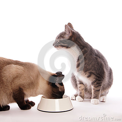 Free Cat With Feeding Bowl Royalty Free Stock Photos - 31505468