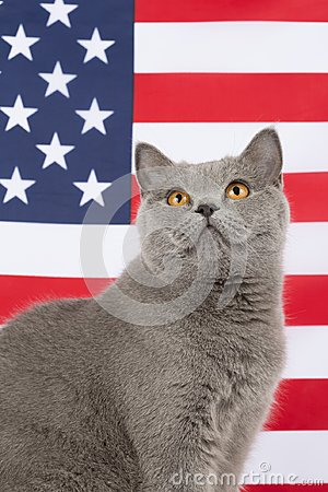 Free Cat With Flag Of USA Stock Photo - 106317450