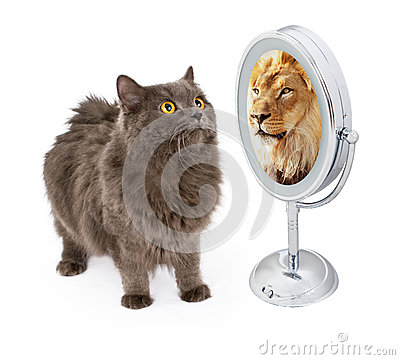 Free Cat With Lion Reflection In Mirror Royalty Free Stock Image - 58080446