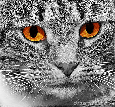 Free Cat With Scary Red Glowing Eyes Stock Photo - 23293780
