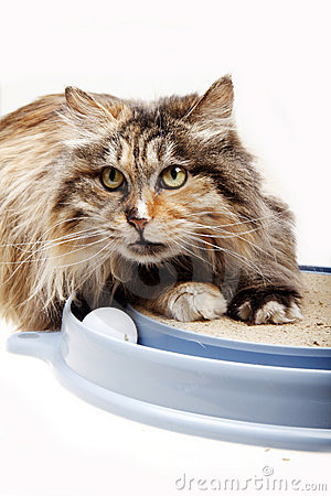 Free Cat With Toy Royalty Free Stock Photos - 19617748